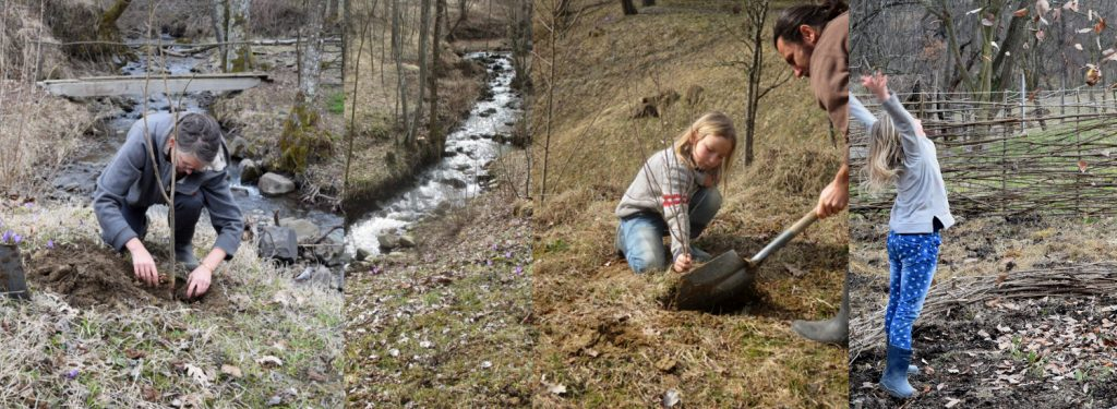 Donate to ForestCreekMeadows in Breb, Romania