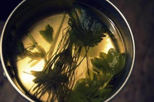 forage for your own herbal tea