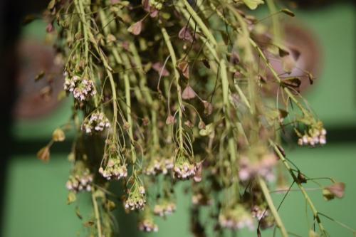 learn foraging basics